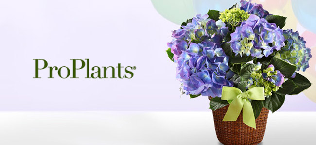 Pro Plants